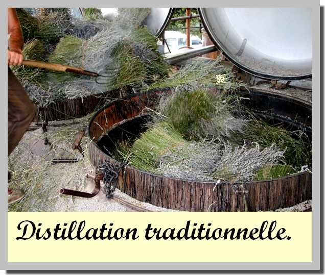 Distillation traditionnelle de la lavande.