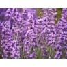 royal-duvet 1.4 fleurs
